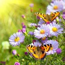 Бабочки01