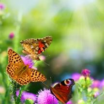 Бабочки02
