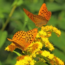 Бабочки03
