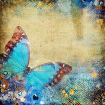Бабочки04