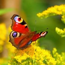 Бабочки05
