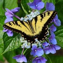 Бабочки06