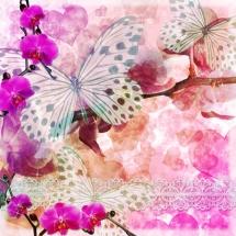 Бабочки07