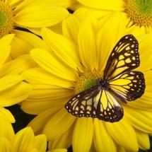Бабочки08