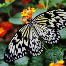 Бабочки09