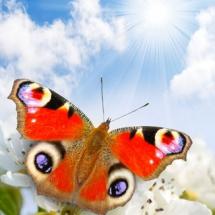 Бабочки10