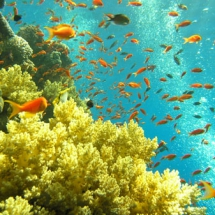 Животные морские04