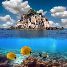 Животные морские08