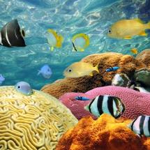 Животные морские17