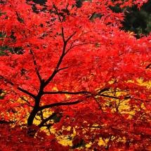 Осень14