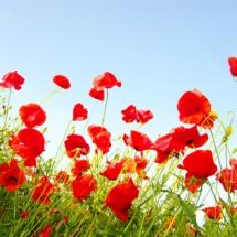 Цветы46