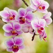 Цветы54