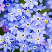 Цветы78